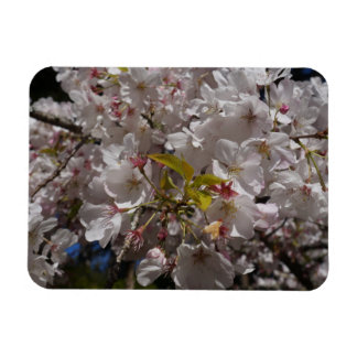 Sakura Cherry Blossom Photo Magnet