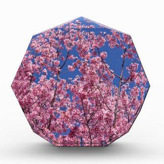 Sakura Cherry Blossoms Into The Blue