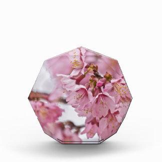 Sakura Cherry Blossoms Pale Pink