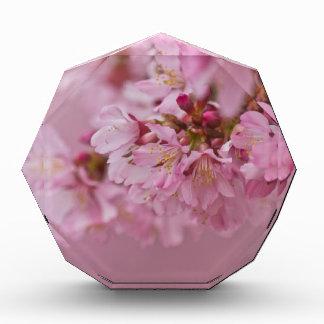 Sakura Cherry Blossoms Pale Pink Reflections