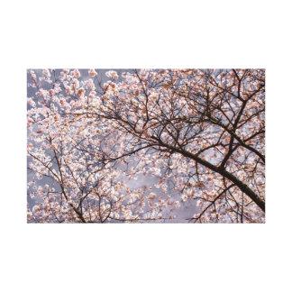 Sakura in bloom canvas print