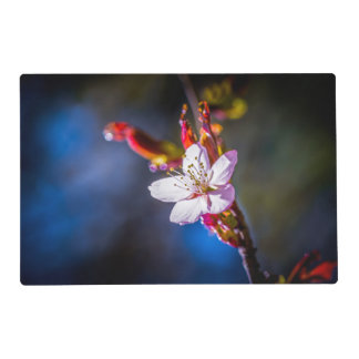 Sakura - Japanese cherry flower Laminated Placemat