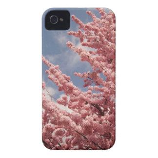 Sakura pink cherry blossom blossoms photograph iPhone 4 case