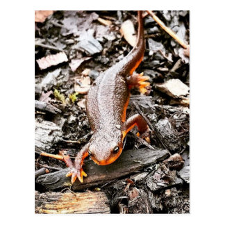 Salamander in the Forest Postcard