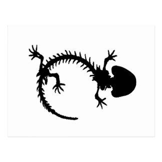 salamander skeleton postcard