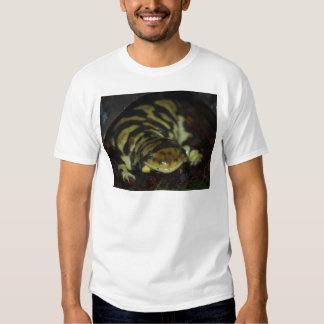 salamandre de tigre tee shirt