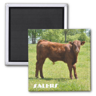 Salers calf magnet