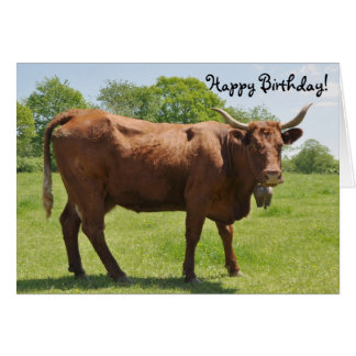Salers cow birthday card