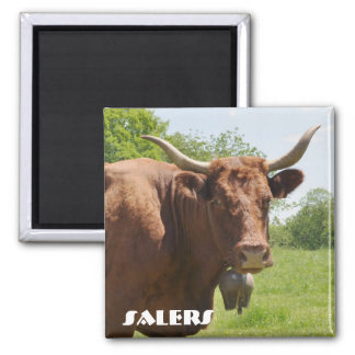 Salers cow magnet