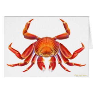 Sally Lightfoot Crab Card
