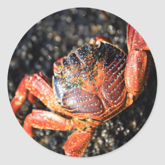 Sally lightfoot crab Galapagos Islands Classic Round Sticker