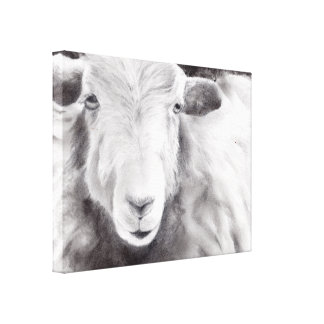Sally the Sheep (a416) Canvas Print