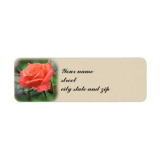 Salmon Rose in Garden