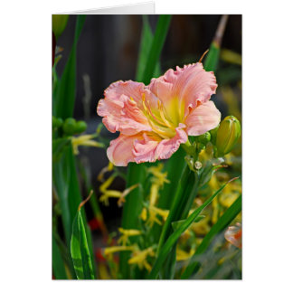 Salmon Ruffled Day Lily Card