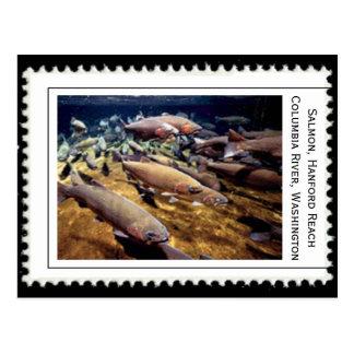 Salmon Washington Postcard