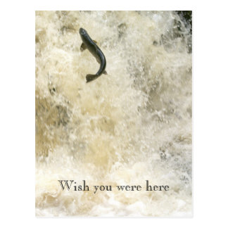 Salmon Wish You Were Here Post Card