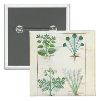 Salt Bush and Anthora Absinthium and Cardamom 2 Inch Square Button