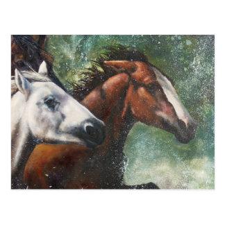 Salt River Wild Horses Postcard
