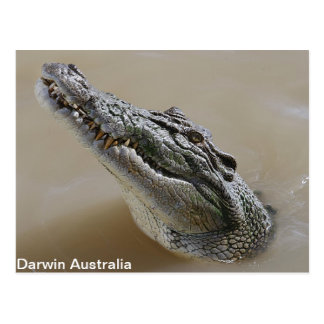 Salt Water Crocodile Darwin Postcard