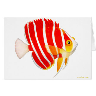Saltwater Aquarium Peppermint Angelfish Card