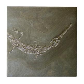 Saltwater crocodile Fossil Steneosaurus bollensis Tile