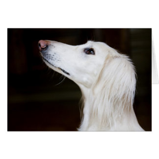 Saluki Looking Up Card