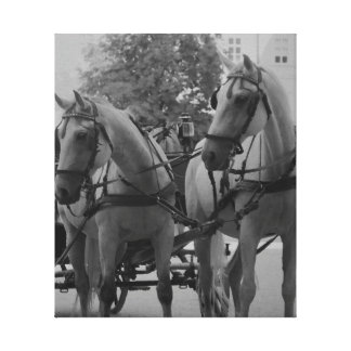 Salzburg Fiaker Horses in black and white. Canvas Print