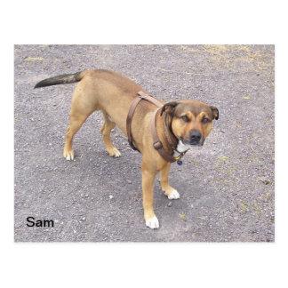 Sam Postcard