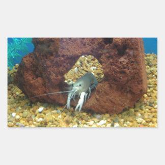 Sam the blue lobster crayfish