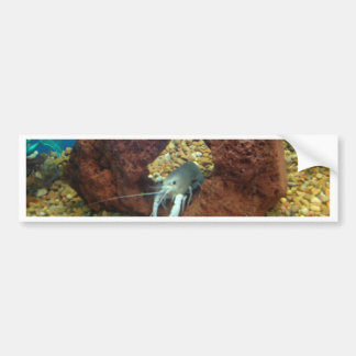 Sam the blue lobster crayfish bumper sticker