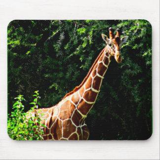 Samburu Giraffe Mouse Pad