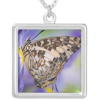 Sammamish, Washington. Papillons tropicaux 22 Pendentif Carré