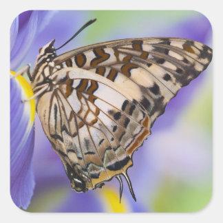 Sammamish, Washington. Papillons tropicaux 22 Sticker Carré