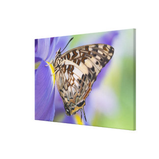 Sammamish, Washington. Papillons tropicaux 26 Toiles Tendues