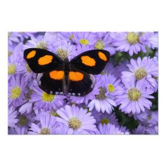 Sammamish Washington Photograph of Butterfly 21