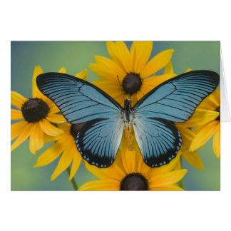Sammamish Washington Photograph of Butterfly 22 Card