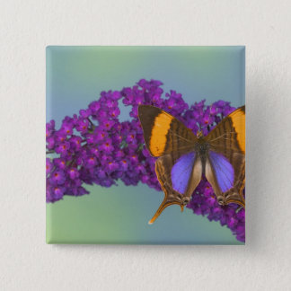 Sammamish Washington Photograph of Butterfly 27 2 Inch Square Button