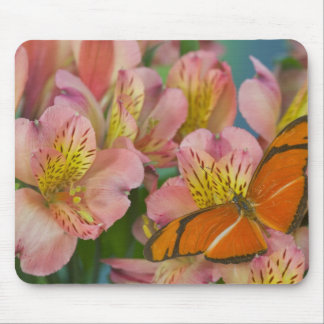 Sammamish Washington Photograph of Butterfly 46 Mouse Pad