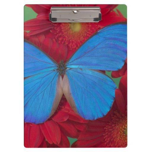 Sammamish Washington Photograph of Butterfly 56 Clipboards