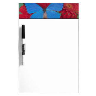 Sammamish Washington Photograph of Butterfly 56 Dry-Erase Whiteboards