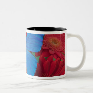 Sammamish Washington Photograph of Butterfly 56 Two-Tone Coffee Mug