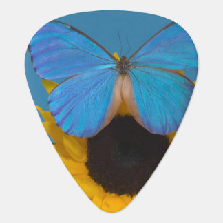 Sammamish Washington Photograph of Butterfly 57 Guitar Pick
