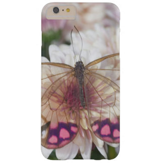 Sammamish Washington Photograph of Butterfly on 15 Barely There iPhone 6 Plus Case