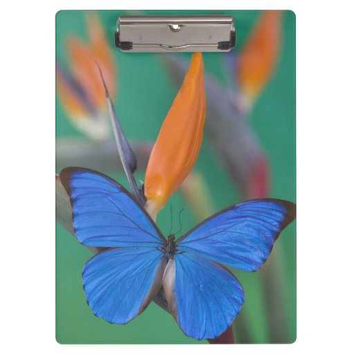 Sammamish Washington Photograph of Butterfly on 2 Clipboards