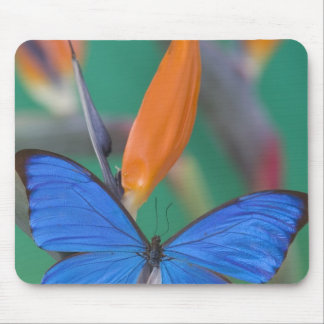 Sammamish Washington Photograph of Butterfly on 2 Mouse Pad