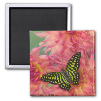 Sammamish Washington Photograph of Butterfly on 3 Square Magnet