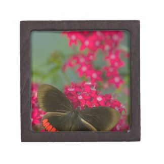 Sammamish Washington Photograph of Butterfly on Premium Gift Box