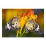 Sammamish, Washington. Tropical Butterflies 10 Photo Print