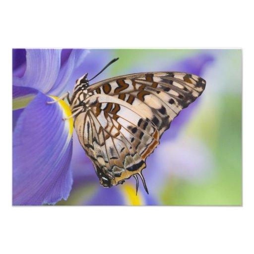 Sammamish, Washington. Tropical Butterflies 26 Photo Art