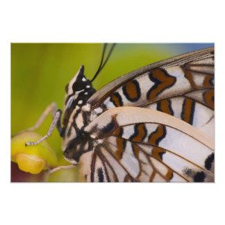 Sammamish, Washington. Tropical Butterflies 27 Photo Print